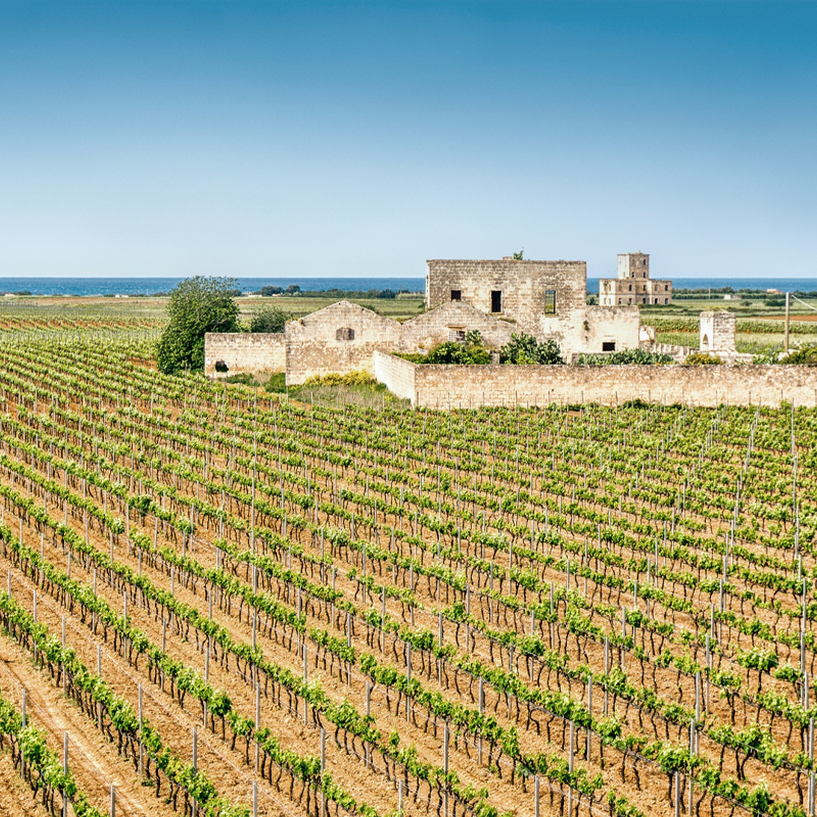 Turismo enologico: a passeggio per vitigni più coltivati di Puglia